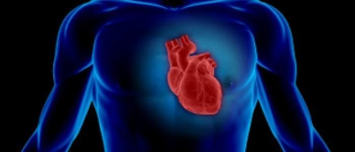 Heart in silhouette